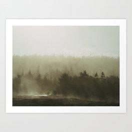 cloudy conifers Art Print