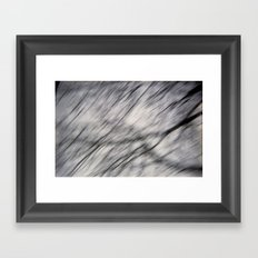 Blurry Tree Branches  Framed Art Print