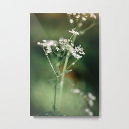 Cow parsley in the meadow Metal Print