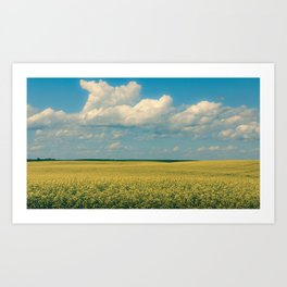 Prairie Summer; big blue skies and golden canola fields  Art Print