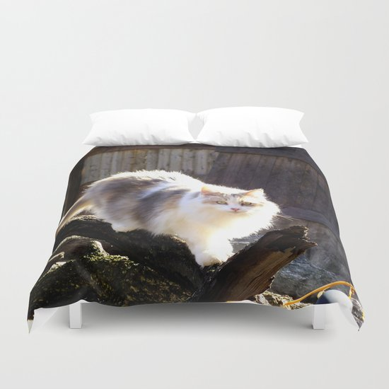 The Beautiful Maine Coon Dilute Calico Duvet Cover