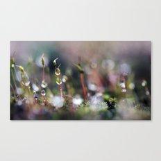 Macro Moss Canvas Print