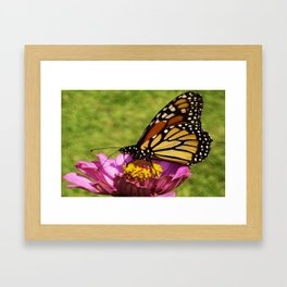 Butterfly2 Framed Art Print