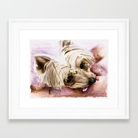 yorkie Framed Art Prints featuring Yorkie by 92Pretzels