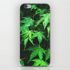 green love  iPhone & iPod Skin