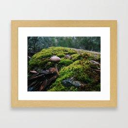 Mushroom Moss Framed Art Print