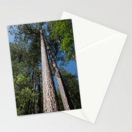 Tall Pine Trees in Mt. Lemmon Stationery Cards