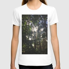 Light Through Trees. Rushmere Country Park, Bedfordshire T-shirt