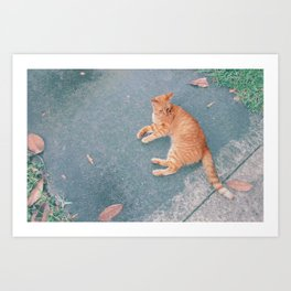 Cat Lounging Art Print