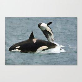 Playful Orcas Canvas Print