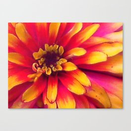 Close Up Flower Canvas Print
