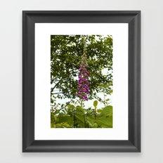 Lovely Lupins Framed Art Print