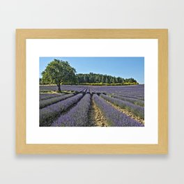 Lavender fields, Provence, France Framed Art Print