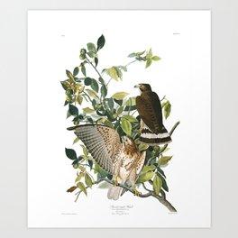 Broad-winged Hawk (Audubon) Art Print