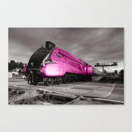 Pink Bittern  Canvas Print