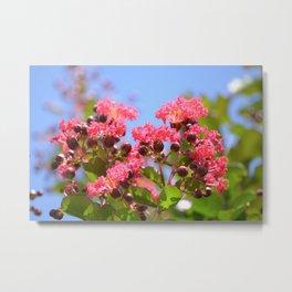 Blooming Pink Crepe Myrtle Flowers Metal Print