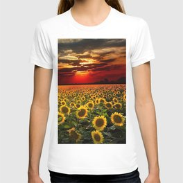 Sunflowers and Sunflower fields at sunset - Scituate, Rhode Island - Jeanpaul Ferro T-shirt