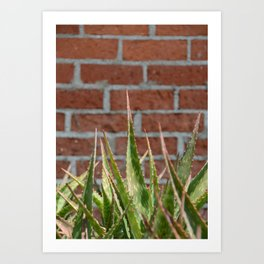 cactus and brick wall Art Print
