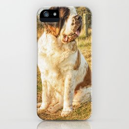 St Bernard dog in the sunset iPhone Case