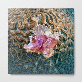 Pink Scorpionfish Metal Print