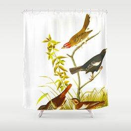 Lark Finch, Prairie Finch, Brown Song Sparrow Shower Curtain