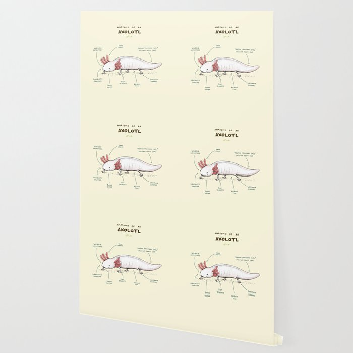 Anatomy of an Axolotl Wallpaper