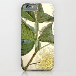 Flower 5075 inga macrophylla Large leaved Inga1 iPhone Case