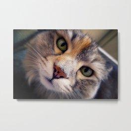 Siberian cat. The Cleopatra's nose. Metal Print