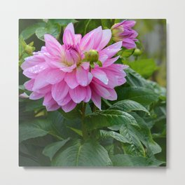 Fresh Rain Drops - Pink Dahlia Two Metal Print