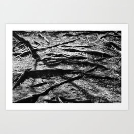 Branched Roots Art Print