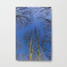 English Trees Metal Print