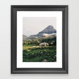 Montana Mountain Goat Family Framed Art Print