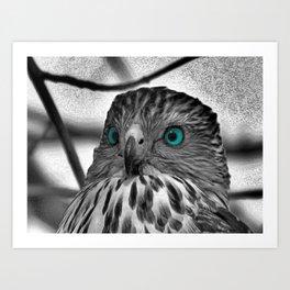 Black and White Hawk with Aqua Blue Eye A165 Art Print