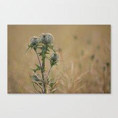 Spear Thistle Canvas Print