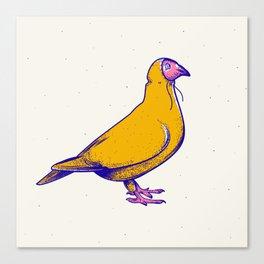 Pigeon in hoodie Canvas Print