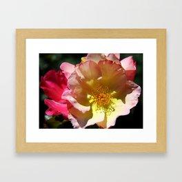 Prettyness Of A Rose Framed Art Print