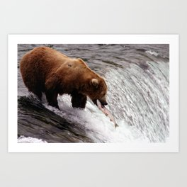 Bear Catching Salmon - Wildlife Photography Art Print