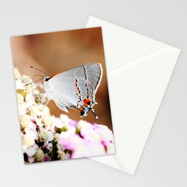 Gray Hairstreak Butterfly Stationery Cards