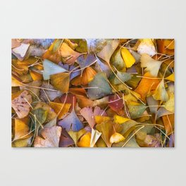 Fallen Ginkgo Leaves Canvas Print