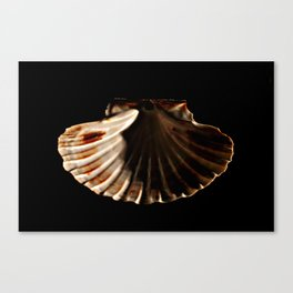 Beauty / Light and Shadow project Canvas Print