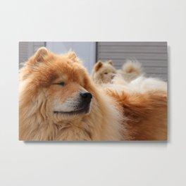 Chow Dogs Metal Print