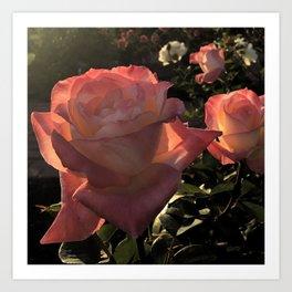 Sunset Roses Art Print