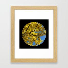 Trees from below 5 Framed Art Print