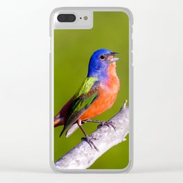 Male Painted Bunting Defending his Territory Clear iPhone Case