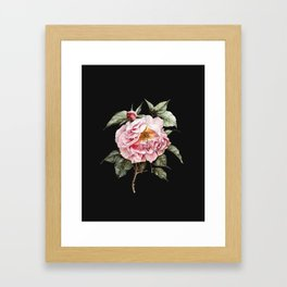 Wilting Pink Rose Watercolor on Charcoal Black Framed Art Print