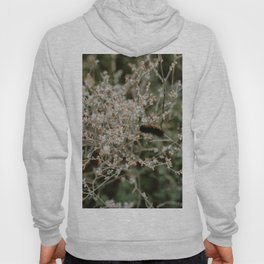 Wooly Bear Caterpillar on Plants - Big Bend Hoody