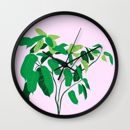 ficus on pink background Wall Clock