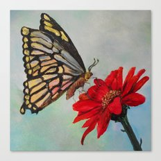 Swallowtail and Gerbera Square Canvas Print