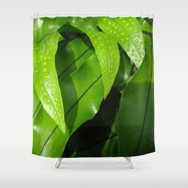 From the Conservatory #42 Shower Curtain