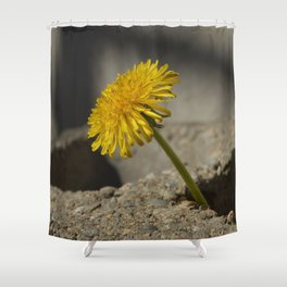Dandelion That Grew From Concrete Shower Curtain